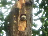 woodpecker02.jpg